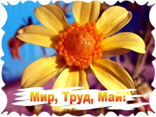 Поздравляем с Майскими праздниками!!!