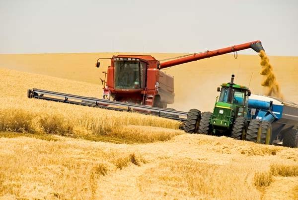 Про підсумки збирання ранніх зернових культур