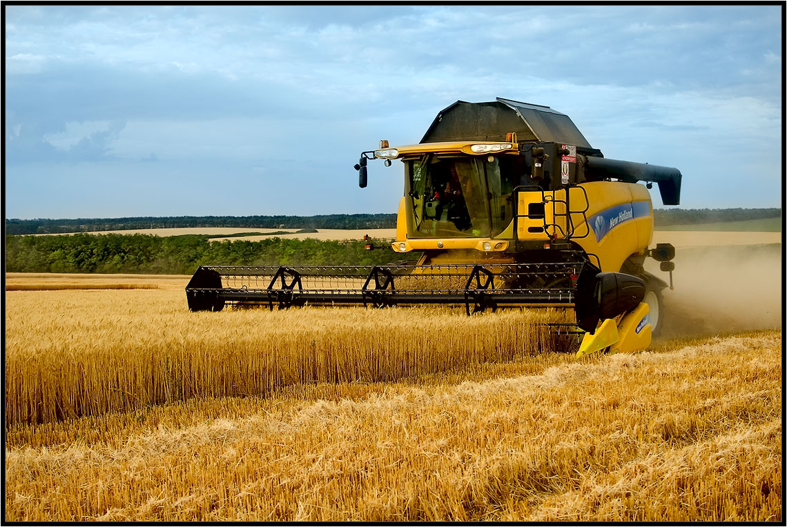 Збирання ранніх зернових культур